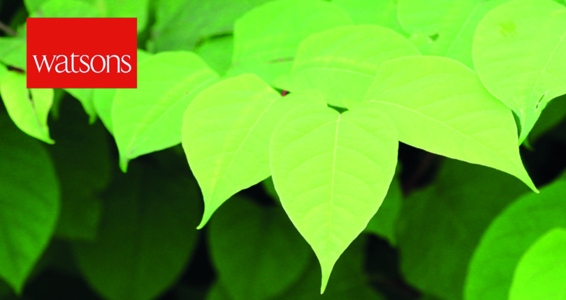 Your Guide to Japanese Knotweed